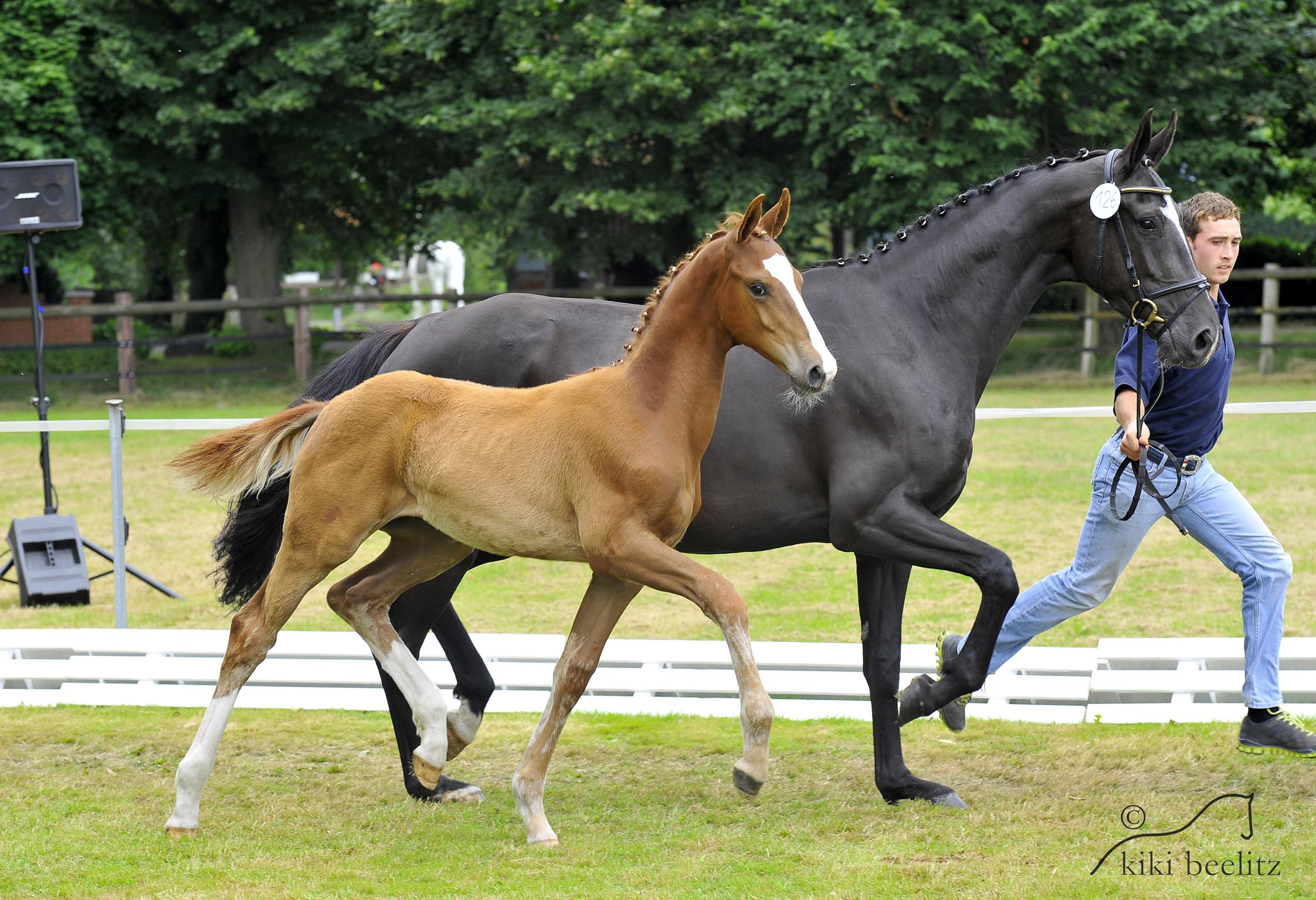 D m warmbloods don amour for Domon frederic